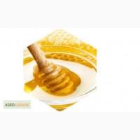 Куплю мед, разнотравье, подсолнечник