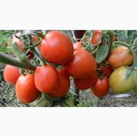 Продам помидоры «Рио Гранде»