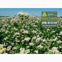 Семена гречихи Девятка, урожай 2017 года от компании Дер Трей