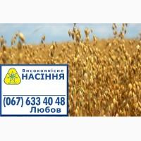 Семена овса голозерного Скарб Украины, 1 репродукция