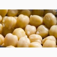 Канадские семена нута platte