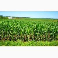 Насіння кукурудзи: Вакула, Онікс, Яніс