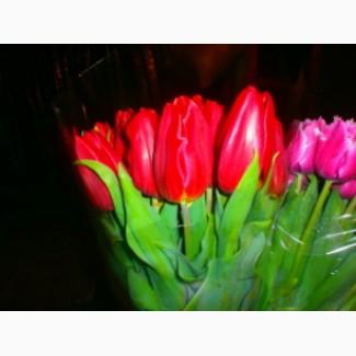 Продам Тюльпаны к 8 марта Голландии