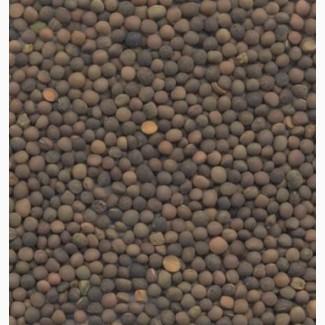 Семена вики яровой ГИБРИДНАЯ 97 элита 1 репрод