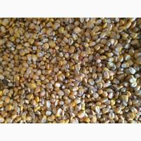 Кукурузу не классную, некондиционную, отходы 1 категории