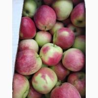 Продам яблука ранніх сортів з власного саду