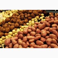 Продам насіннєву картопля. Різних сортів. Ціна договірна