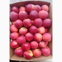 Продам яблукa сортy Флорінa
