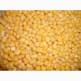 Підприємство купляє з місця кукурудзу дорого
