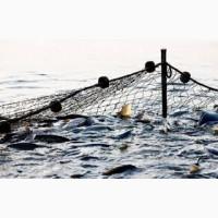 Продам за рыбок:Щука, линь, карпа, амура, толстолобик