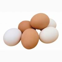 Продам яйцо куриное
