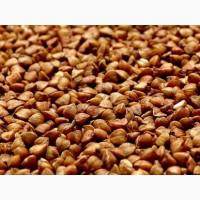Куплю сою кукурузу подсолнечник гречку пшеницу Зерновые Житомир Ровно Винница Украина