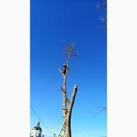 Cпил (удаление) и обрезка деревьев любой сложности