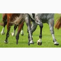 Для Лошадей -для отличной физической формы и здоровых копыт
