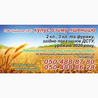 Куплю пшеницу 2 кл., 3 кл., 4 кл