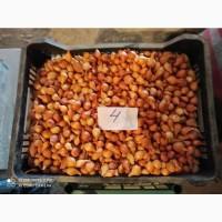 Продаётся лук севок для товарного лука и на перо