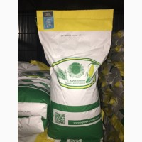 Семена кукурузы ДН Пивиха (ФАО 180). Урожай 2020