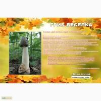 Настойка гриба Веселка, 3л - 630грн, 1л - 270грн