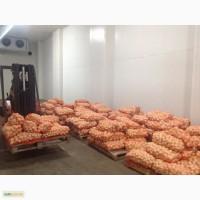 Продам очищенный лук 5- 8 см
