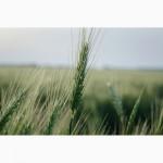 Урожай 2020 ЗЕРНОВЫХ культур любого качества (ЗАКУПАЕМ!)