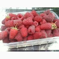 Продам свежи, ягоды малины