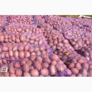 Продажа картофеля розница