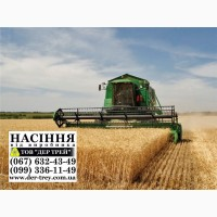 Продаем семена яровой пшеницы, посевной материал пшеницы