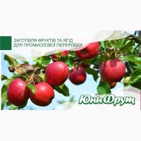 Куплю яблоки для промышленной переработки от 20 т