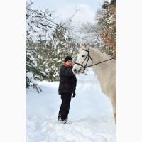 Лошадь чистопородная орловская рысачка