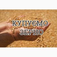 Компанія проводить закупівлю пшеницю 3-6 клас з місця по Волинській області