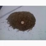 Продам насіння кульбаби лікарської