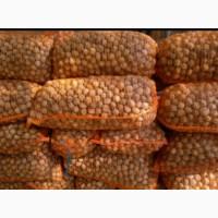 Грецкий орех кругляк доставка