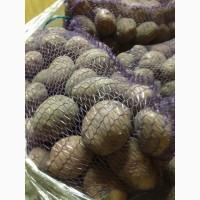 Продам картофель в Днепре