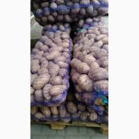 Продам картофель белароса и других сортов