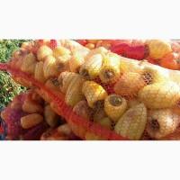 Продам перец белозерку с поля