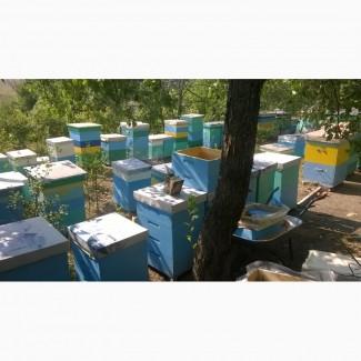 Продам пчелопакеты и пчелосемьи харьков. Старый Салтов