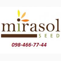 Семена от компании MIRASOL Seed/МИРАСОЛ официальный представитель в Украине