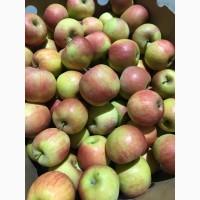 Продамо газоване яблуко ГреніСміт, Фуджі, Голден, Ред Делішес