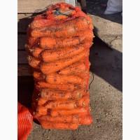Продам крупную морковь на переработку или общепита
