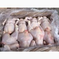 Предлагаем Курицу на Экспорт