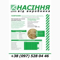 Насіння ячмінь Галичанин, еліта / 1 репродукція від виробника, документи