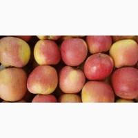 Продам яблука фуджі, голдон, айдарет