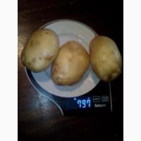 Купим картофель