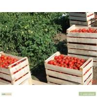 Ящики деревянные в крыму для помидоров от производителя