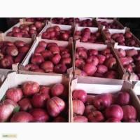 Оптовые поставки яблок
