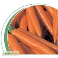 Профессиональные семена моркови Волкано F1 (Volcano F1) 100 000 семян, Nickerson Zwaan