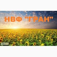 Посівний матеріал соняшника (під гранстар) Барса, Толедо, Нео, Бонд, Рембо, Матадор, Ауріс