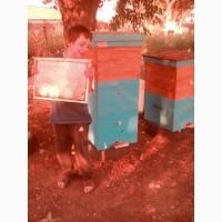 Продам пчёлосеми пакеты пчёл с ульями и без