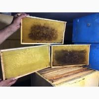Продам рамки суш для пчел 2017 года 230 и 300мм большое количество