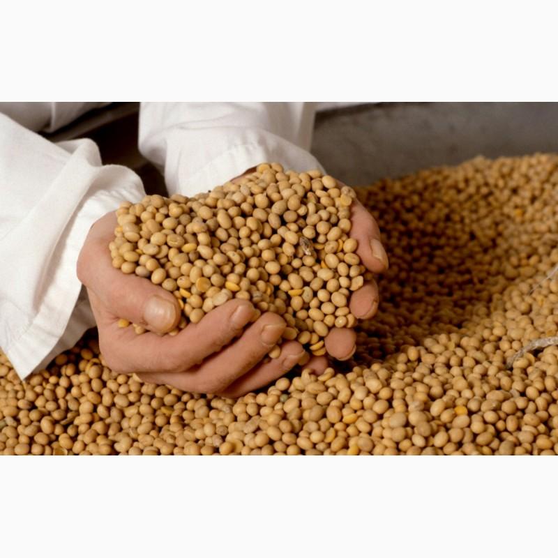 в семенах сои содержится 20
